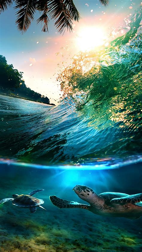 hd tropical sea island turtles android wallpaper