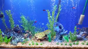 Disney Wall Stickers Uk 45 litre fish tanks what you need to know aquatics world