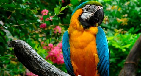 colorful parrots colorful animals colorful parrot all god s creatures
