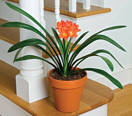 best plants for apartment air quality top 10 plants to improve indoor air quality the green life