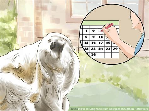 are golden retrievers bad for allergies how to diagnose skin allergies in golden retrievers 10 steps