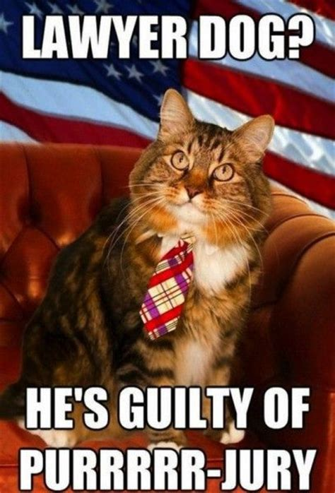 Lawyer Cat Meme - 139 best nerdy law school humor images on pinterest