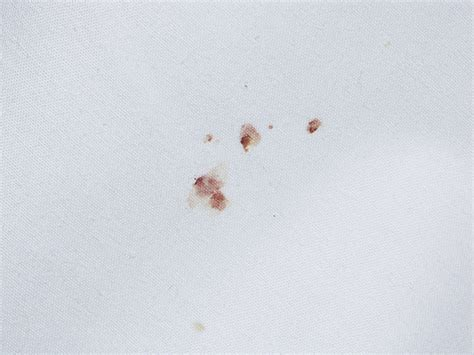 bed bug blood stains bed bug signs common signs of bed bugs