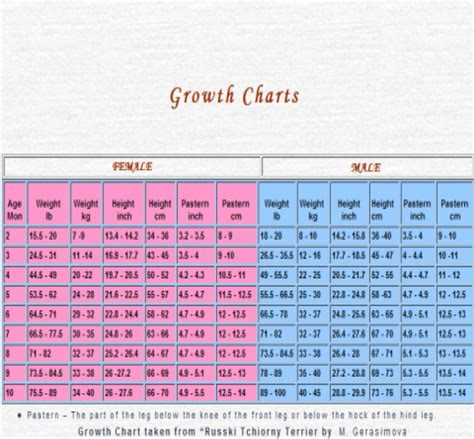 golden retriever growth chart golden retriever puppy growth chart pictures to pin on pinsdaddy