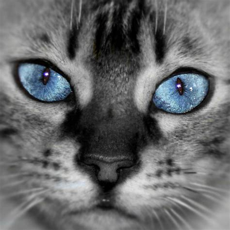 icy blue icy blue eyes related keywords icy blue eyes long tail