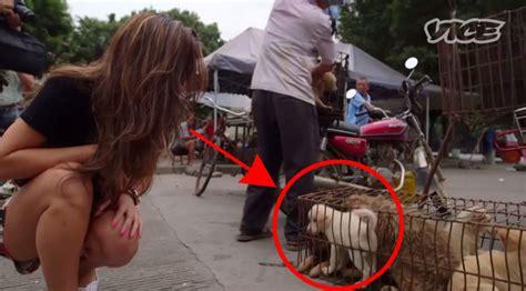yulin festival in china esto tiene que acabar el terrible festival de carne de perro de yulin