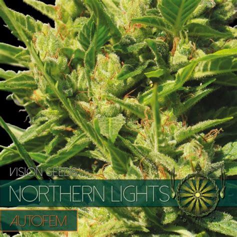 northern lights autofem vision seeds