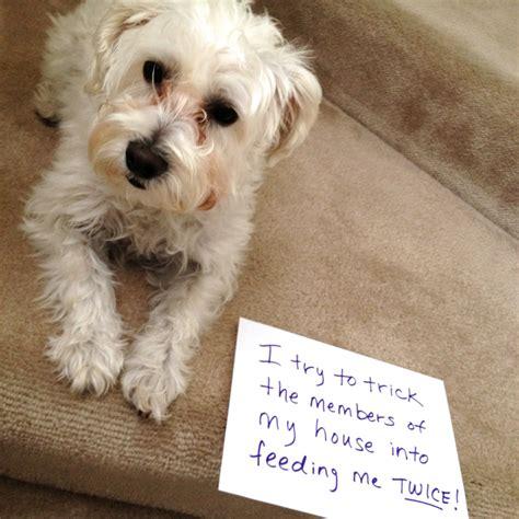 shamed dogs shaming archives dogsplendor