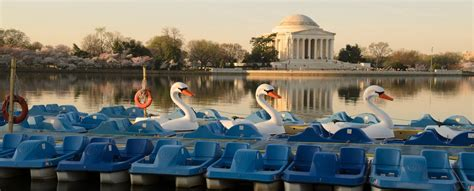 paddle boats dc tidal basin boathouse swan boat and pedal boat rentals