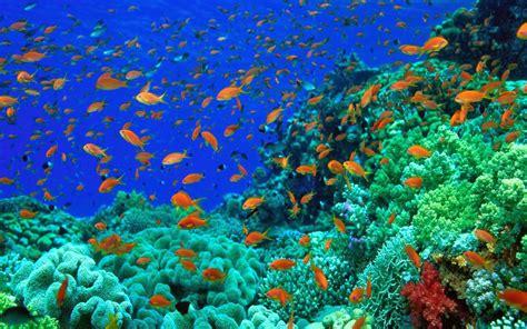wallpaper bergerak ikan nemo 20 wallpaper bawah laut terbaru bangiz