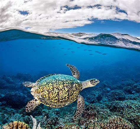 blue planet ii a new world of depths books blue planet ii new photography book showcases the