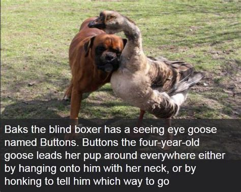 cool facts about dogs interesting facts about dogs 25 pics