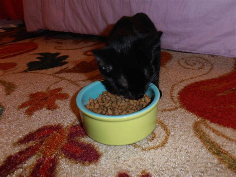 Pet Giveaways - petbrosia pet food giveaway jerri1962sblog
