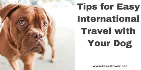 traveling internationally with a tips for easy international travel with your tower 24 hour passport and visa
