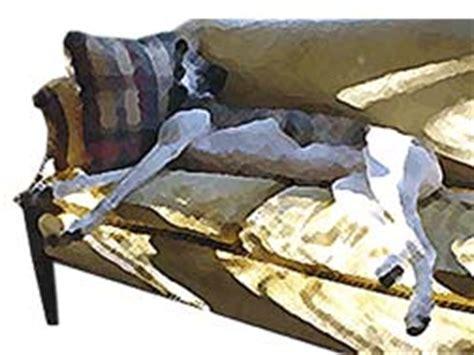 greyhound couch potato greyhounds make fantastic pets adopt a greyhound