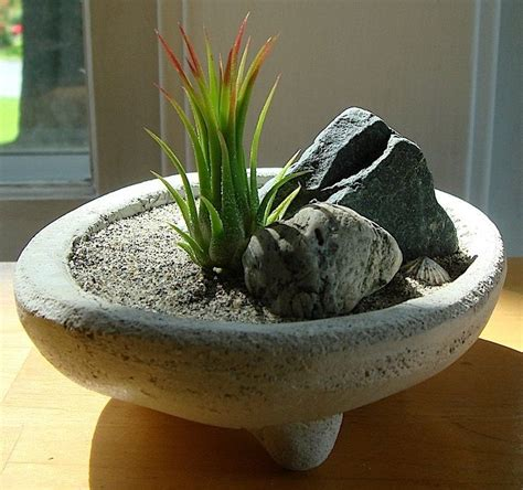 Mini Zen Garden by Miniature Zen Garden Plants Are