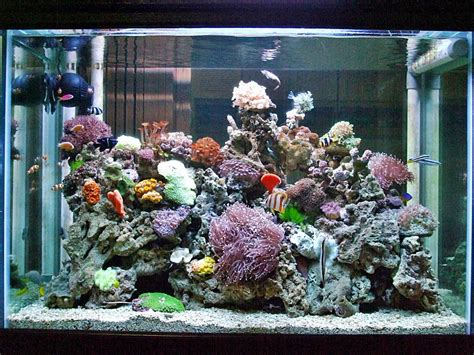 Pakan Ikan Hias Kecil akuarium ikan hias newhairstylesformen2014