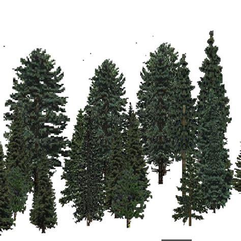 usa forest adirondack  england evergreen dense