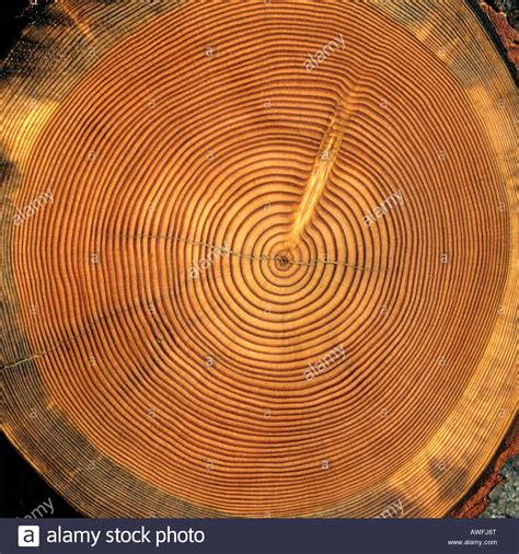 Tree Trunk Cross Section by Tree Trunk Cross Section Tree Rings Stock Photo Royalty Free Image 16567343 Alamy