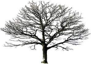 Best Photos Of Bare Tree Drawing  Winter Pencil sketch template