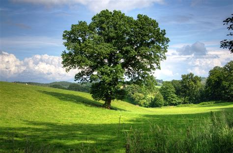 Landscape View Pictures Free Photo Tree Oak Landscape View Field Free Image