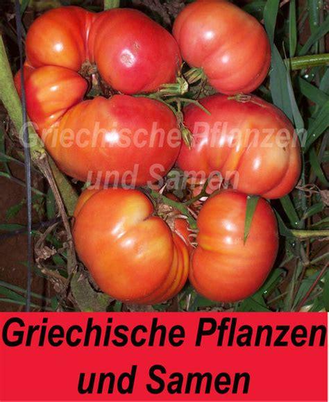 Tomaten Samen Pflanzen 3861 by Tomaten Samen Pflanzen Tomaten Aussaat Anleitung F R Die
