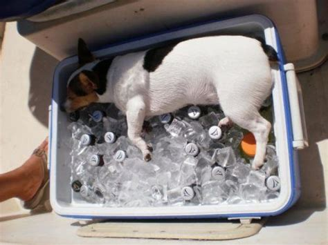 too hot funny pic 12 people who didn t realize how smart their dogs were