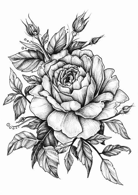 drawing pattern of rose best 25 rose drawings ideas on pinterest roses drawing