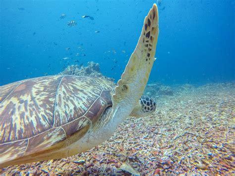 dive gili trawangan scuba diving with trawangan dive centre in gili t the
