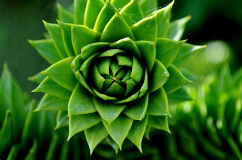 selective focus photography  green succulents