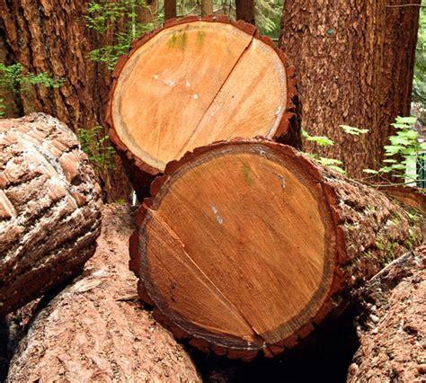 diversi tipi di legno tipi di legno naturale bricoportale fai da te e bricolage