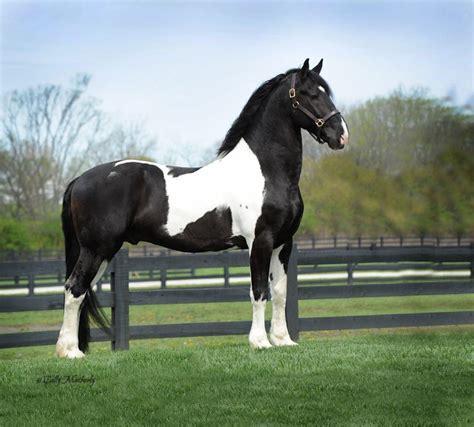 imagenes a blanco y negro de caballos videos de animales caballos animales en video