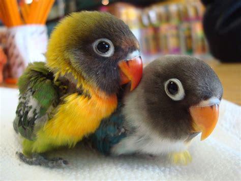 pet species so small pet birds species small pets bir ωαtchєr