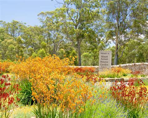cbelltown botanical gardens mt annan botanic garden the australian botanic garden