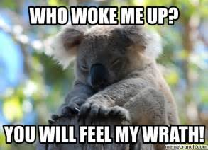 Meme Generator Koala - welcome to memespp com