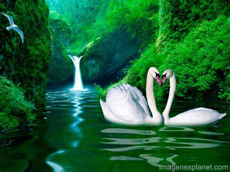 imágenes bellas en movimiento imagenes de paisajes con movimiento y frases imagui