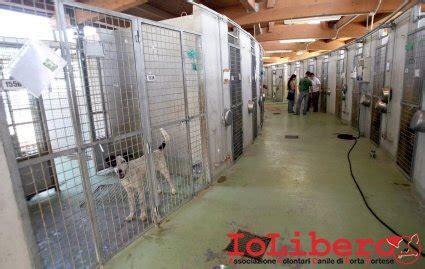 canile porta portese roma adozioni cani canili di roma avcpp iolibero