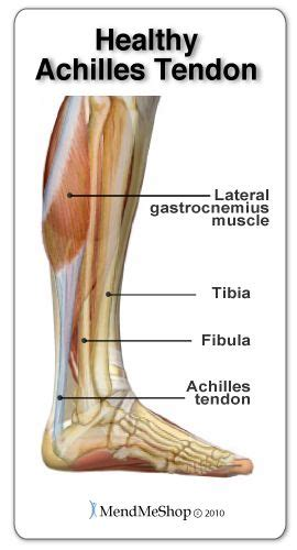 boat shoes hurt back of foot 79 best images about achilles tendon on pinterest