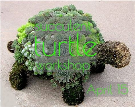 succulent turtle succulent turtle workshop at texas backyard garden center