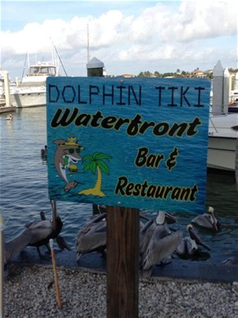 Dolphin Tiki Bar View Of The Marina From Our Table Dolphin Tiki Picture