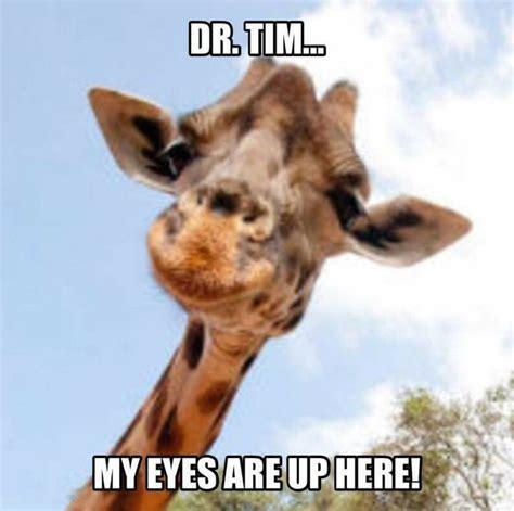 Meme Giraffe - best 25 giraffe meme ideas on pinterest