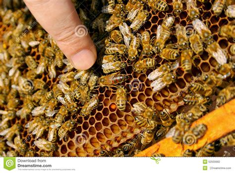 bees inside a beehive with the bee in the middle
