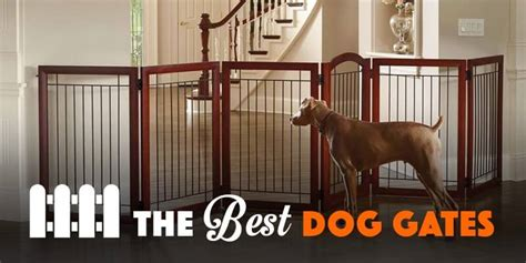 best puppy gate 5 best gates for indoor use staircases 2017 reviews