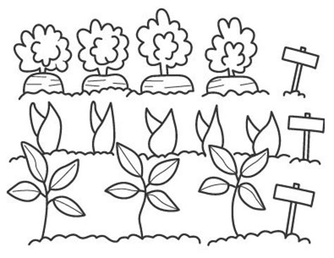 imagenes de huertas escolares para colorear colorear dibujos de huertas