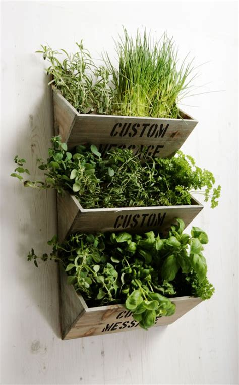 wall mounted herb garden personalised large wall mounted herb planter kit 163 29 99