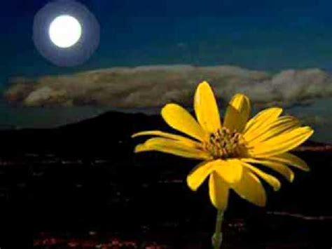 di notte fiore fiore di basilicata