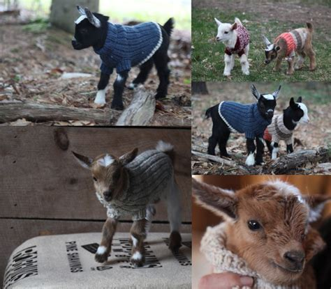 pattern for knitted goat sweater 1000 images about knitting and crochet on pinterest