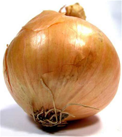 onion hu images reverse search onion hu images reverse search