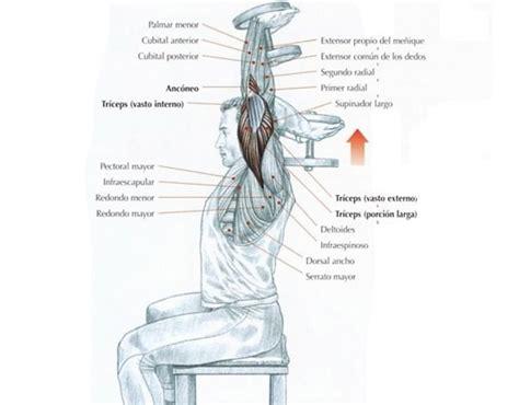 ejercicios mancuernas en casa 6 ejercicios de tr 237 ceps con mancuernas