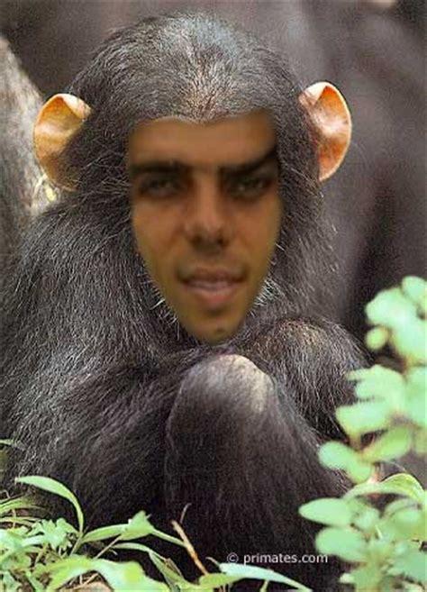 le singe image  logo anime gratuit pour votre mobile